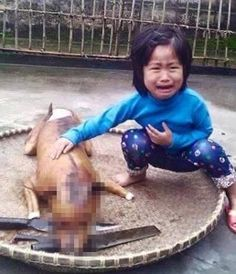 Five-year-old girl finds her missing pet dog being sold ready-cooked at Vietnamese stall