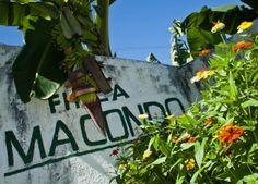 Una crónica de Alberto Salcedo Ramos sobre cómo es el lugar que ayudó a crear 100 años de soledad