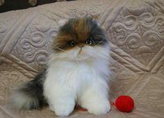 Persian kitty Masyanya By Natalia - Bear Pile