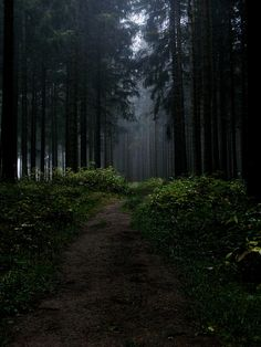 mysterious forest | Flickr - Photo Sharing!