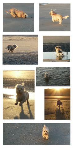 Summer in Holland: Ziggy on the beach