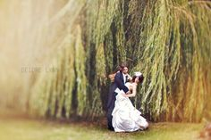 We have this exact tree, right next to a pond, less than a mile from our house. Can you say bridal shoot? :) www.BetsyBlue.com