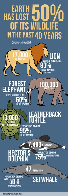 This Info-graphic on How Much Wildlife We've Lost in the Past 40 Years, Will…
