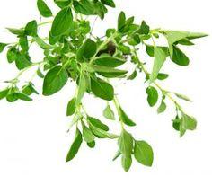 Cómo funcionan las plantas medicinales