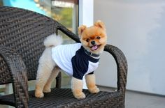 When I met up with Jiff, he was sitting pretty and playing it casual outside of a bakery. | 42 Things That Happened During My Day With The Second Most Famous Pomeranian In The World