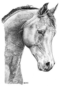 Good example for lesson in creating value with pen & ink stippling technique - tactile texture rendering - Paard - Horse; Dotted Drawings, Ink Pen Drawings, Horse Drawings, Animal Drawings, Stippling Art, Horse Art, Horse Head, Equine Art, Pen Art