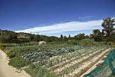 Verdures protegides. #Cultius #Verdures #Bages #Albergínia #Mercat #Terra #SlowFood #Barcelona