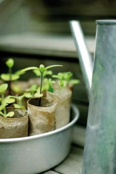 Recycled toilet paper rolls as seeding pots.    I normally compost mine but this is a good idea.