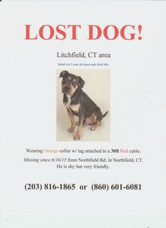 reunited  Lost & Found Animal Page   LITCHFIELD CT AREA!! Rebel got loose t (6/16/15). pHe still has 30ft feet of cable attached to his collar. This is very dangerous. He could be running, he could be caught in the woods. He was just adopted 6/13/15 so he doesn't know the area well yet. PLEASE SHARE!!!!! Thank you