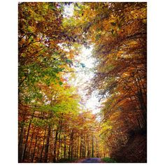 Autumn colors forest walking nature silence
