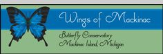 Wings of Mackinac ~ Our beautiful butterfly conservatory is located on historic Mackinac Island, Michigan.