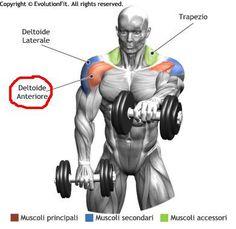 esercizi deltoide - Cerca con Google