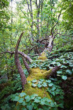 mossy wonder