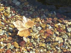 Rebecca's Hearth and Home: 31 Days of the Joys of Autumn - Leaves In Water