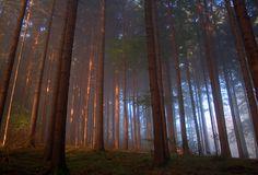 Wald Morgennebel Schwarzwald Sonnenaufgang