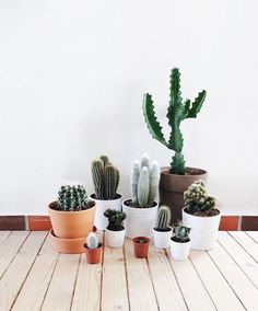 7 Houseplants You Need for Your College Dorm or Apartment Gardening tools and green thumbs optional. Succulent Terrarium, Cacti And Succulents, Planting Succulents, Cactus Plants, Planting Flowers, Cactus Art, Indoor Cactus, Indoor Plants, Mini Cactus Garden