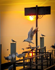 by Marisa Livet Aquatic Birds, Bird Wings, A Moment In Time, Amazing Sunsets, Lausanne, Gull, Nature Images, Color Of Life, Light And Shadow