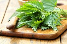 All You Need to Know About Stinging Nettle – Benefits, Effects, Uses etc. Superfoods, Nettle Benefits, Nettle Leaf Tea, Seasonal Allergies, Cold Sore, Korn, Health And Wellness, Natural Remedies, Ale