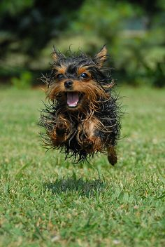 Today Is Your Day, Be Happy #happy #running #dogs #dentedego