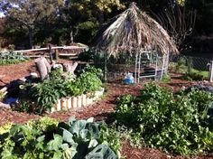 chicken-coop Permaculture, Mandala, Chicken, Plants, Flora, Plant, Mandalas, Coloring Pages Mandala, Planting