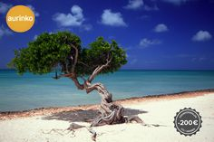 Learn about and browse the Caribbean island of Aruba. Browse the Aruba vacation and tourist information. Cvc, Promotion, Unique Trees, Tourist Information, Varanasi, Holiday Destinations, Hotels And Resorts, Strand, Travel Photos
