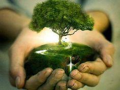 Siga Bonsai ⚓ Oficial ( para nunca perder fotos e vídeos que ele publicar. Mother Earth, Mother Nature, Image Zen, Kunst Online, Just Dream, Dream Land, We Are The World, Tree Art, Tree Of Life