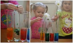 Flower Experiment for Kids- a fun
