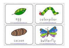 Creative Curriculum Preschool, Preschool Writing, Preschool Science, Preschool Learning, Learning Activities, Very Hungry Caterpillar Printables, Hungry Caterpillar Craft, Butterfly Books, Butterfly Crafts