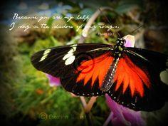 Inspirational Photograph, Bible Verse - Psalm 63:7