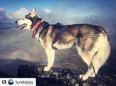 Stolt. #reiseblogger #reiseliv #reisetips #reiseråd  #Repost @turskippy (@get_repost)  Sliten kriger heilt på toppen!  #dnt