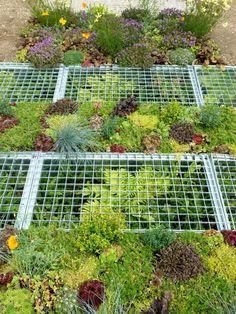 Get expert tips for adding a low-maintenance, drought-tolerant rock garden to your landscape. Ferns Garden, Garden Paths, Garden Landscape Design, Garden Landscaping, Gabion Cages, Alpine Garden, Driveway Design, Foliage Plants, Drought Tolerant
