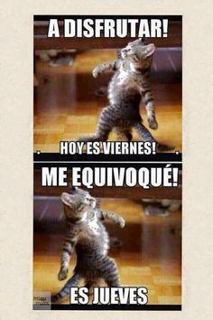 Jueves Funny Animal Memes, Cute Funny Animals, Funny Animal Pictures, Funny Images, Funny Cats, Funny Jokes, Memes Humor, Frases Humor, Funny Spanish Memes