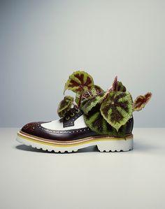 Fabrice Fouillet Plant shoes Shoe still life
