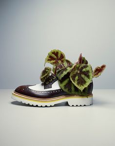 fashion photographer Fabrice Fouillet's homage to fractal variagation:  cyclamen-embellished wingtips (Latin faber = fabricator, artisan,  French « fouliot » = L. (f)pŭleium, fleabane (a minty fragrance, from L.pūlex for flea) http://www.lexilogos.com/latin/gaffiot.php?q=puleium