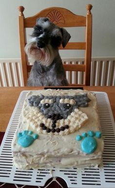Schnauzer & his schnauzie cake! I JUST LOVE the look on his face!!
