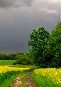Rural field track [location and photographer unknown]