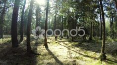 Hiker in Dark Forest with sunny patches in 4K - Stock Footage   by JahnProductions