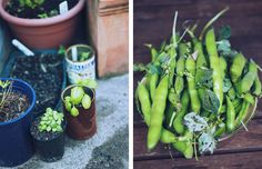 November/Summer knowledge for the home garden
