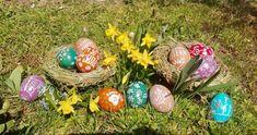 Die Erlebnisgärtnerei wünscht allen schöne Ostern!   Wer von euch hat auch seine Ostereier gefärbt? 😊 #selfmade   #ostern #easter #ostereier #diy #spring #narzisse #frühling #narcissus #erlebnisgärtnerei #hödnerhof #ebbs #mils #hall #tirol #ausflugsziel #erleben Happy Easter, Easter Eggs, Coloring Easter Eggs, Daffodils, Seasons, Flowers, Happy Easter Day