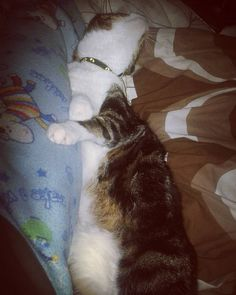 #ElMasConsentido #GordoLui #Gatito #Cats #CatsLove #AmorGatuno #CatsLovers #Gato #Gatos #Kitty #Arrunchis #Life #Vida #Love #Amor #PerfectLove #PerfectLife #Bedtime  #Night #Noche by shalom.angel