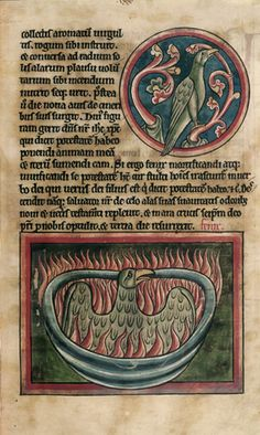 A miniature from a thirteenth-century English bestiary of a phoenix (symbol of resurrection/rebirth) biting a branch and, below burning before rising again from the ashes; (Harley 4751 f.45). (British Library)