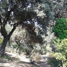 Mallorca hello_anna_maria