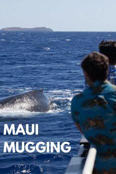 Imagine being mugged by a humpback whale. #travel #adventure #hawaii #maui