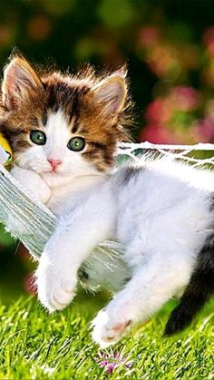 I have a degree in relaxation - you'll find that cats are unsurpassed world experts on the subject! Super Cute Animals, Cute Funny Animals, Cute Baby Animals, Animals And Pets, Kittens And Puppies, Cute Cats And Kittens, Kittens Cutest, Pretty Cats, Beautiful Cats