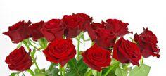 Nie masz pomysłu na prezent? Chcesz komuś podziękować, a nie wiesz jak? Wyślij kwiaty! Mamy najniższe ceny!