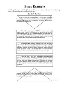 how to write a visual opinion essay