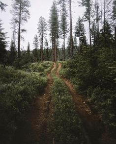 Lovely Forest... Scent of Pine pinterest ↣ @kkatieclaire