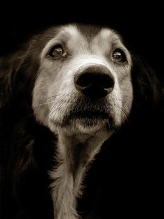 Author of bestselling books Shelter Dogs and Street Dogs and photographer from Rhode Island Traer Scott shows us emotive portraits of what is generally known as man's best friend. Shelter Dogs, Animal Shelter, Animal Rescue, Street Dogs, Old Dogs, Dog Portraits, Dog Photos, Beautiful Dogs, Beautiful Pictures