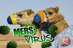 Cara Mengatasi Virus Mers >> Virus Mers yang di laporkan pertama ada di Arab saudi adalah penyakit yang di akibatkan oleh virus dan menyerang saluran pernafasan, pasti nya anda yang mau beribadah ke tanah suci tidak mau ikut tertular dong yaa ?? maka dari itu kami rekomendasikan untuk anda yaitu herbal alami yang dapat menangkal semua virus pada badan anda.