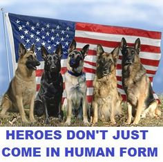 ♥♥They too are American and fighting for our FREEdoms